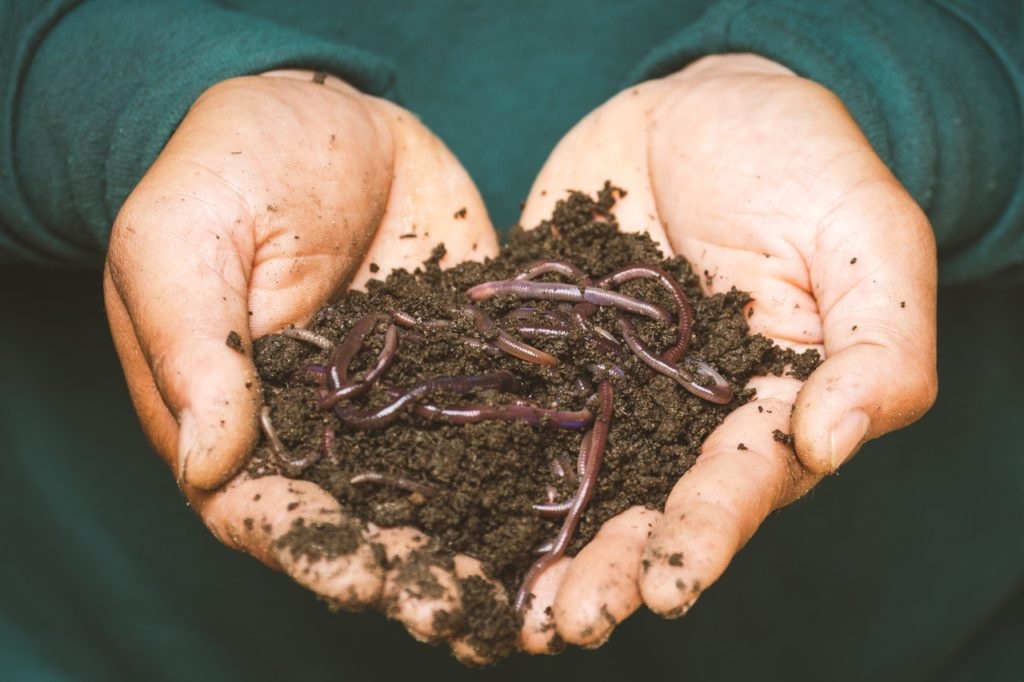 ver à compost